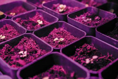 Спектральные датчики повышают урожайность при использовании полупроводникового освещения