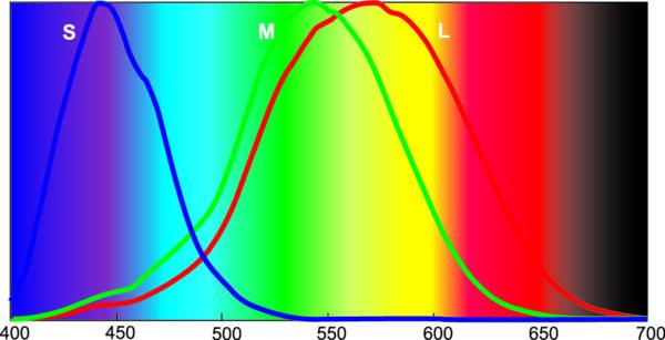 Нормированные кривые чувствительности L-, M- и S-колбочек