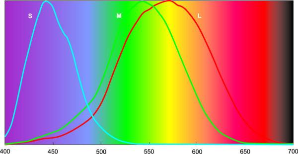 Нормированные кривые чувствительности L-, M- и S-колбочек. Цвет фона соответствует значениям длин волн, отложенных по оси абсцисс