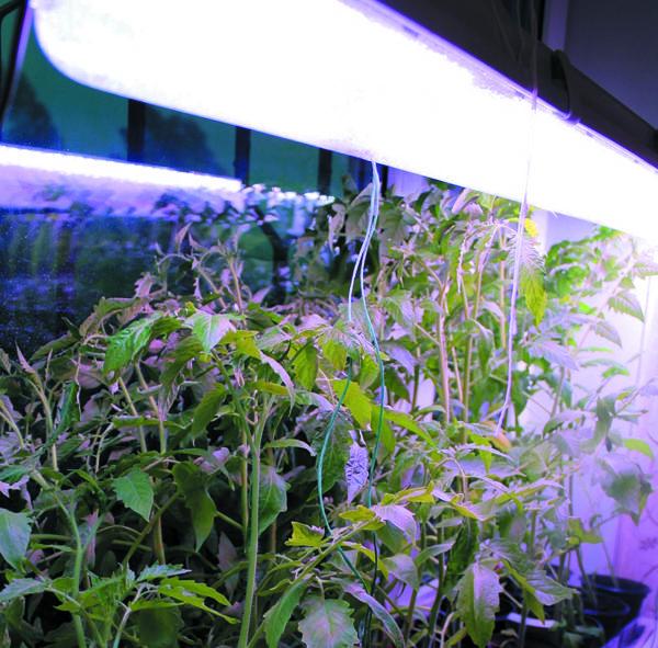 Экспериментальные широкополосные светильники для досветки рассады