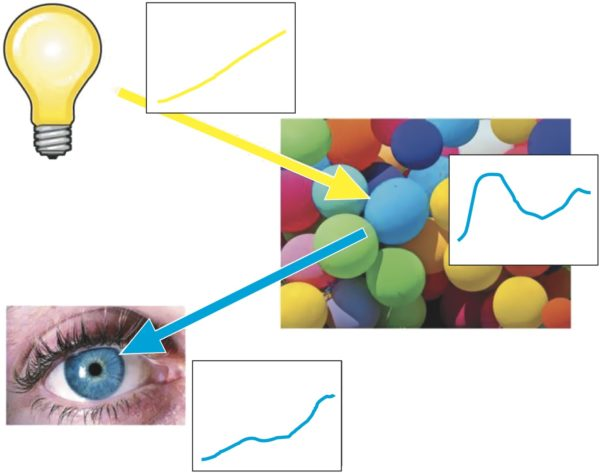 Спектр излучения лампы видоизменяется спектральным отражением пигмента голубого мяча, формируя новый спектр света, который попадает в глаз