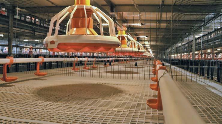 Светодиодные светильники системы ИСО «Хамелеон» в клетках для выращивания цыплят-бройлеров