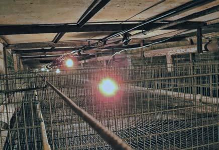 Клеточное оборудование для выращивания цыплят-бройлеров