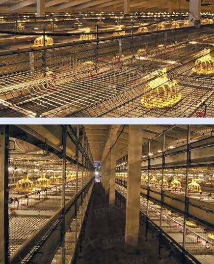 Клеточное оборудование со светодиодным освещением ИСО «Хамелеон»