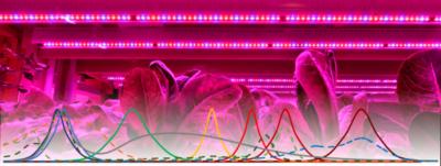 Вебинар «Фито Светопитание»: как правильно подобрать светодиоды для растений?
